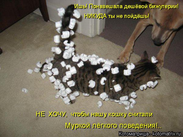 Котоматрица: Ишь! Понавешала дешёвой бижутерии!  Муркой лёгкого поведения!.. НЕ  ХОЧУ,  чтобы нашу кошку считали НИКУДА ты не пойдёшь!