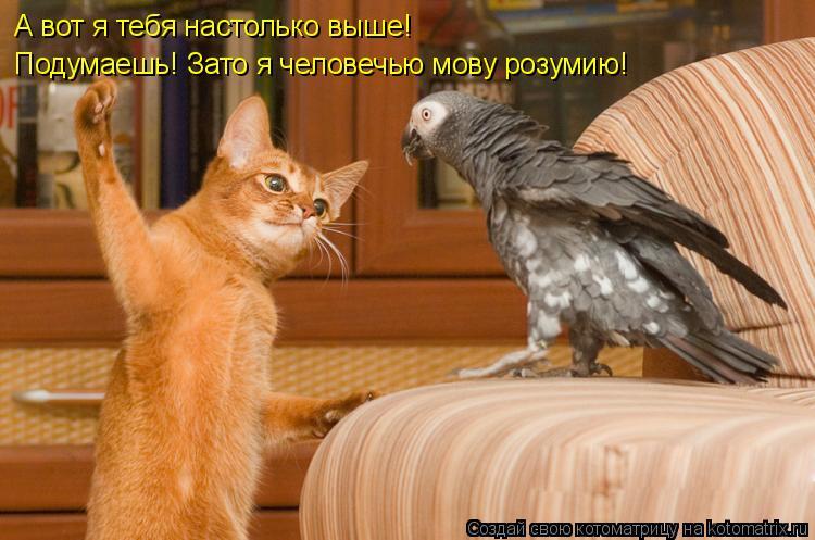 Котоматрица: А вот я тебя настолько выше! Подумаешь! Зато я человечью мову розумию!