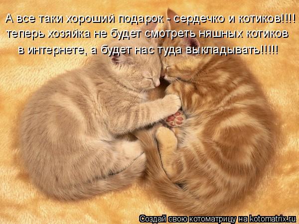 Котоматрица: А все таки хороший подарок - сердечко и котиков!!!! теперь хозяйка не будет смотреть няшных котиков в интернете, а будет нас туда выкладывать!
