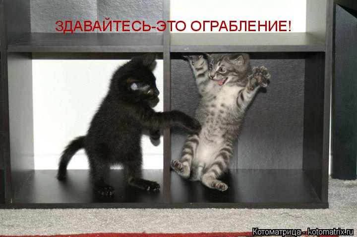 Котоматрица: ЗДАВАЙТЕСЬ-ЭТО ОГРАБЛЕНИЕ!