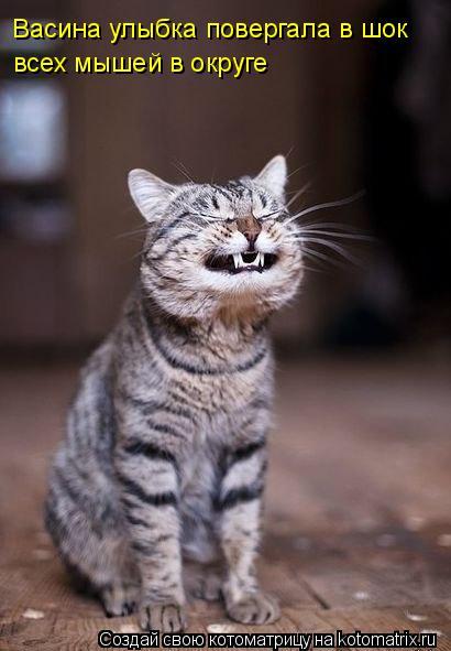 Котоматрица: Васина улыбка повергала в шок  всех мышей в округе