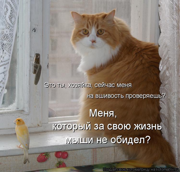 Котоматрица: на вшивость проверяешь? Это ты, хозяйка, сейчас меня Меня, который за свою жизнь  мыши не обидел?
