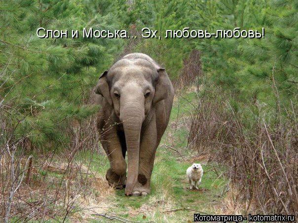 Котоматрица: Слон и Моська... Эх, любовь-любовь!