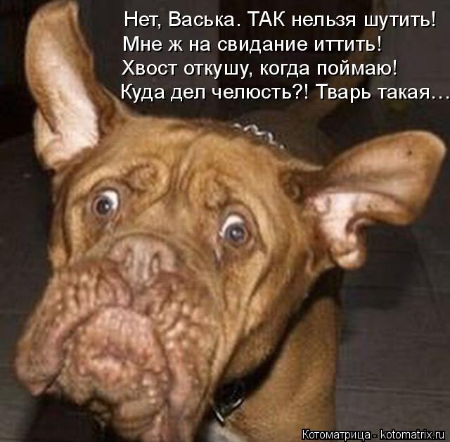 Котоматрица: Нет, Васька. ТАК нельзя шутить! Мне ж на свидание иттить! Хвост откушу, когда поймаю! Куда дел челюсть?! Тварь такая…