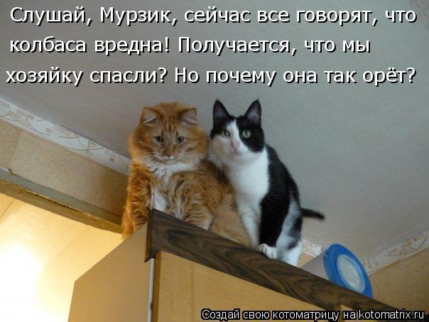 Котоматрица: Слушай, Мурзик, сейчас все говорят, что  колбаса вредна! Получается, что мы  хозяйку спасли? Но почему она так орёт?