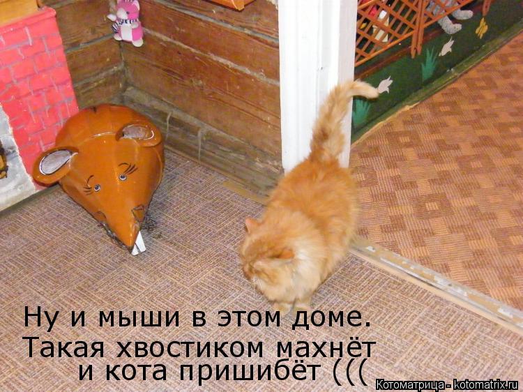 Котоматрица: Ну и мыши в этом доме. Такая хвостиком махнёт  и кота пришибёт (((