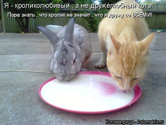 Котоматрица: Я - кроликолюбивый , а не дружелюбный котэ! Пора знать , что кролик не значит , что я дружу со ВСЕМИ!