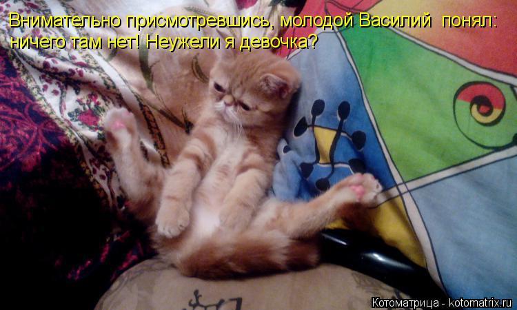 Котоматрица: Внимательно присмотревшись, молодой Василий  понял: ничего там нет! Неужели я девочка?