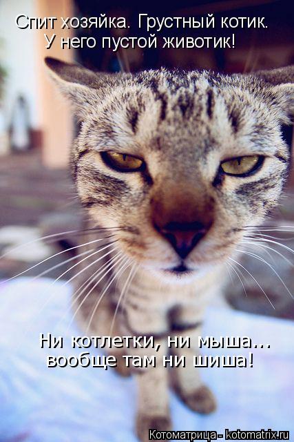 Котоматрица: Спит хозяйка. Грустный котик. У него пустой животик! Ни котлетки, ни мыша... вообще там ни шиша!