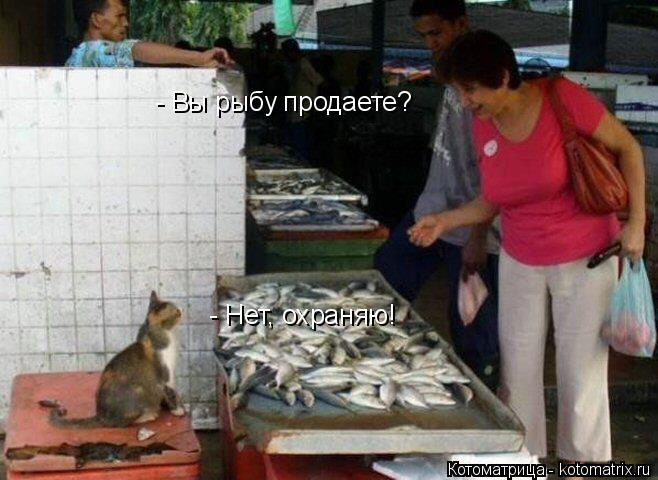 Котоматрица: - Вы рыбу продаете? - Нет, охраняю!