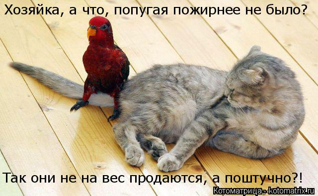 Котоматрица: Так они не на вес продаются, а поштучно?! Хозяйка, а что, попугая пожирнее не было?