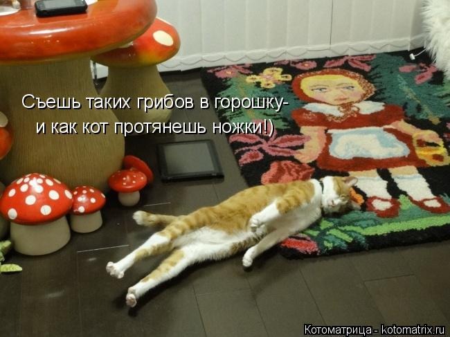 Котоматрица: Съешь таких грибов в горошку- и как кот протянешь ножки!)