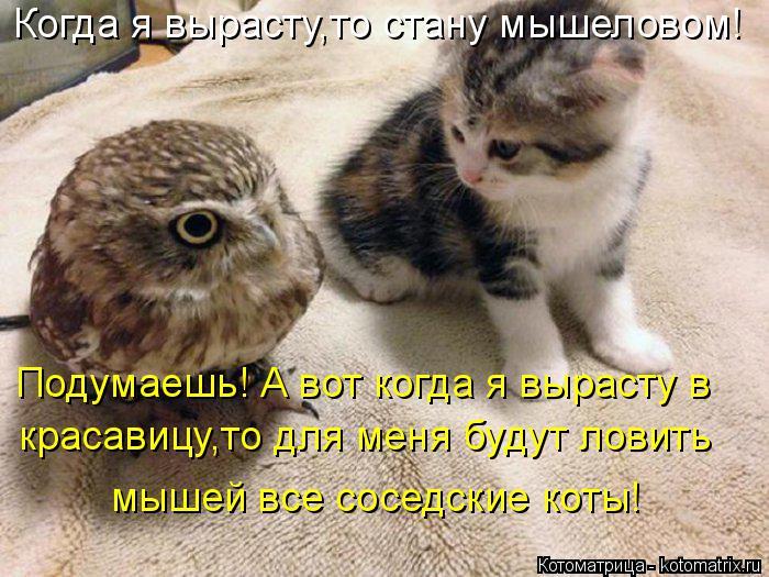 Котоматрица: Когда я вырасту,то стану мышеловом! Подумаешь! А вот когда я вырасту в красавицу,то для меня будут ловить мышей все соседские коты!