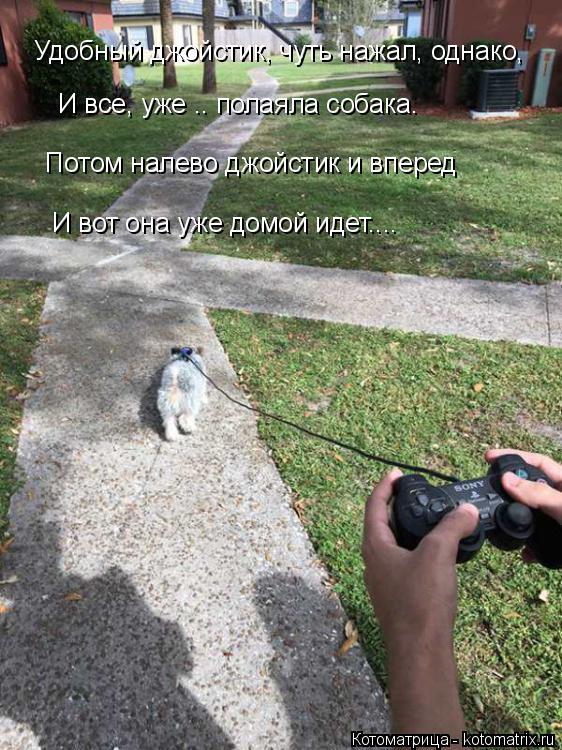 Котоматрица: И все, уже .. полаяла собака. Удобный джойстик, чуть нажал, однако, Потом налево джойстик и вперед И вот она уже домой идет....