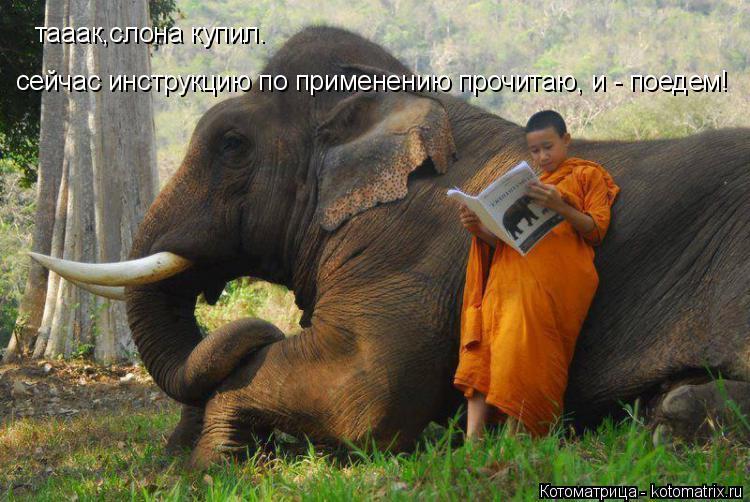 Котоматрица: тааак,слона купил. сейчас инструкцию по применению прочитаю, и - поедем!