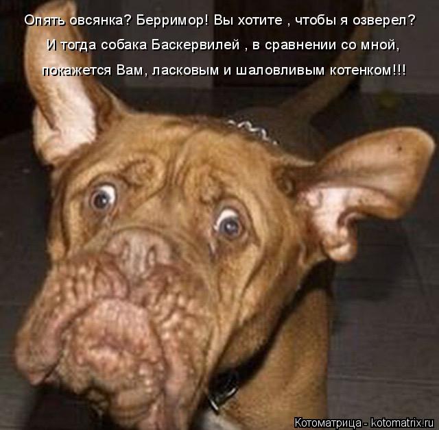 Котоматрица: И тогда собака Баскервилей , в сравнении со мной, покажется Вам, ласковым и шаловливым котенком!!! Опять овсянка? Берримор! Вы хотите , чтобы я