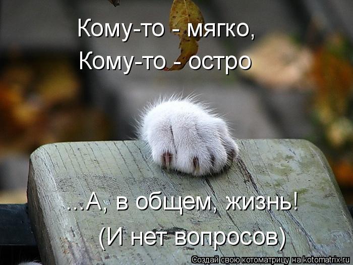 Котоматрица: Кому-то - мягко, Кому-то - остро ...А, в общем, жизнь! (И нет вопросов)