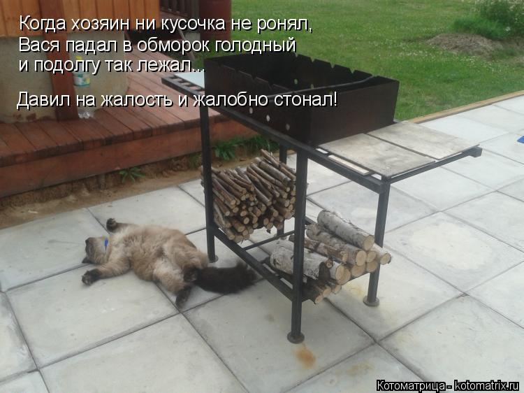 Котоматрица: Когда хозяин ни кусочка не ронял, Вася падал в обморок голодный и подолгу так лежал... Давил на жалость и жалобно стонал!