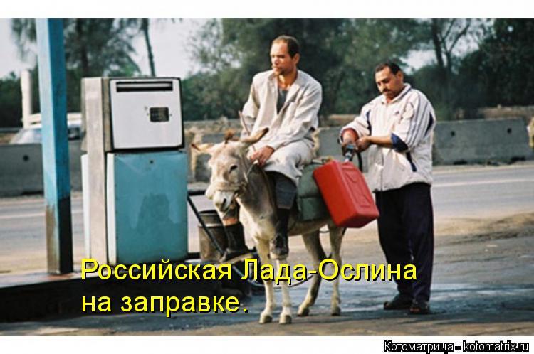 Котоматрица: Российская Лада-Ослина на заправке.