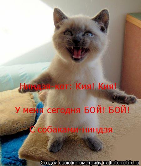 Котоматрица: Ниндзя-кот: Кия! Кия! У меня сегодня БОЙ! БОЙ! С собаками-ниндзя