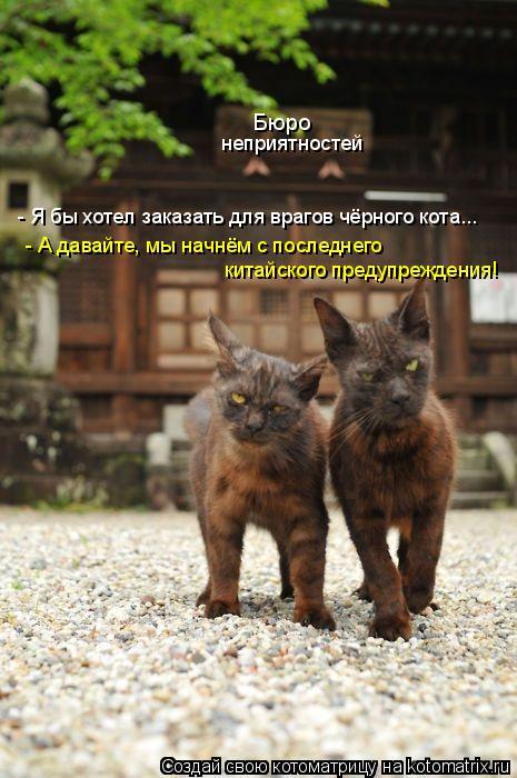 Котоматрица: Бюро неприятностей - Я бы хотел заказать для врагов чёрного кота...  - А давайте, мы начнём с последнего  китайского предупреждения!