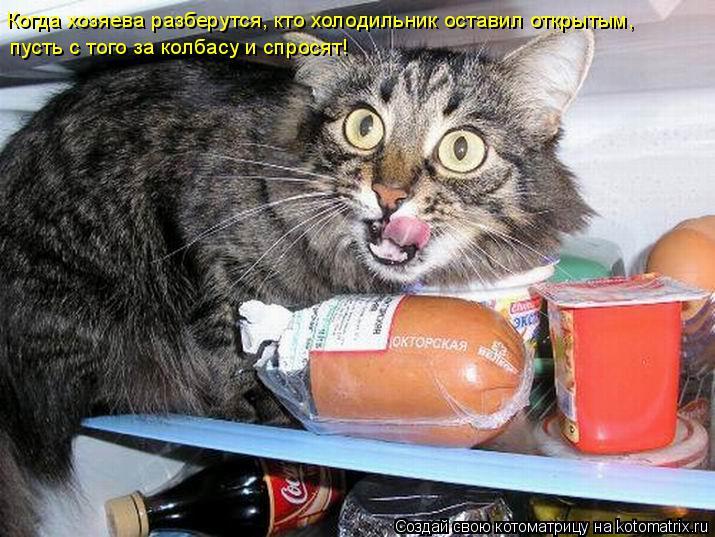 Котоматрица: Когда хозяева разберутся, кто холодильник оставил открытым,  пусть с того за колбасу и спросят!