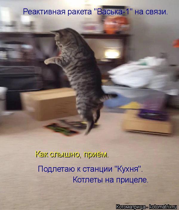 """Котоматрица: Реактивная ракета """"Васька-1"""" на связи. Как слышно, приём. Подлетаю к станции """"Кухня"""". Котлеты на прицеле."""