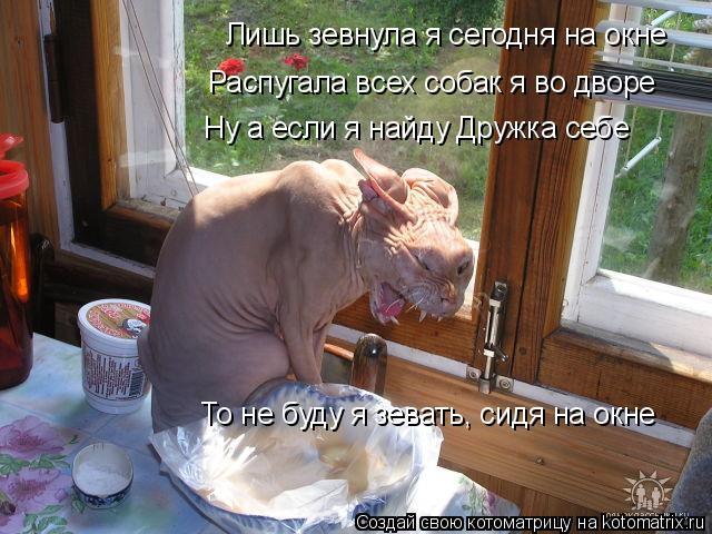 Котоматрица: Лишь зевнула я сегодня на окне Распугала всех собак я во дворе Ну а если я найду Дружка себе То не буду я зевать, сидя на окне