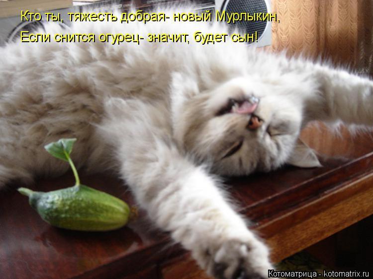 Котоматрица: Кто ты, тяжесть добрая- новый Мурлыкин, Если снится огурец- значит, будет сын!