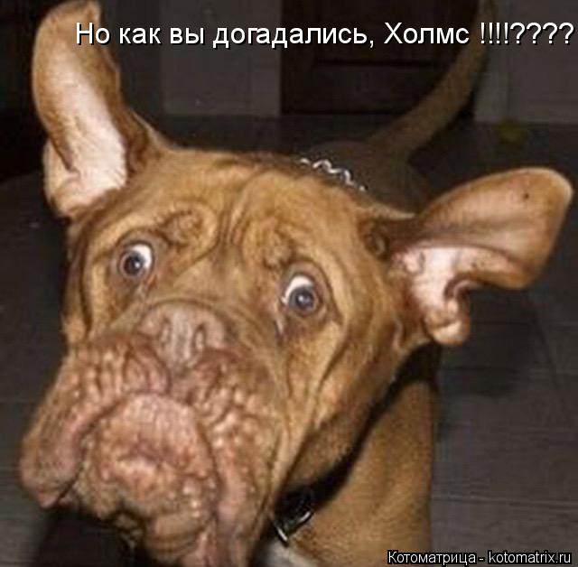 Котоматрица: Но как вы догадались, Холмс !!!!????