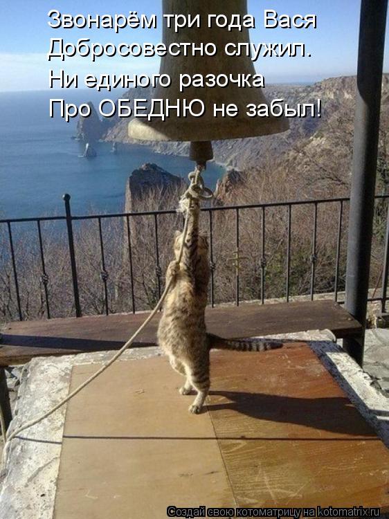 Котоматрица: Звонарём три года Вася Добросовестно служил. Ни единого разочка Про ОБЕДНЮ не забыл!