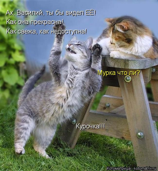 Котоматрица: Как свежа, как недоступна! Ах, Василий, ты бы видел ЕЁ! Как она прекрасна!  Мурка что ли? Курочка!!!