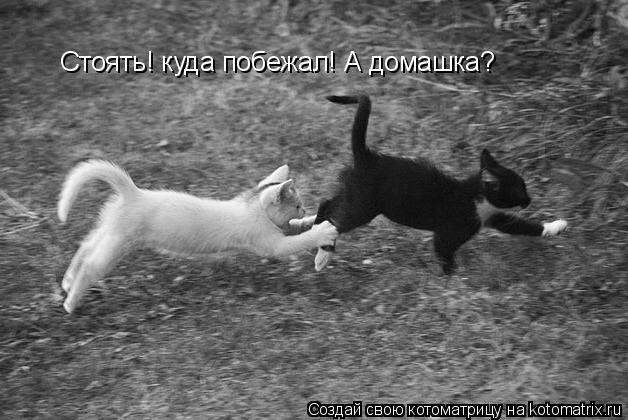 Котоматрица: Стоять! куда побежал! А домашка?