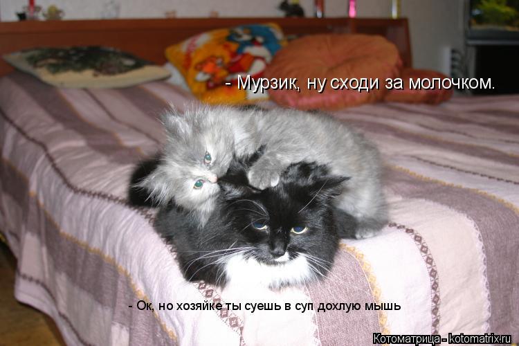 Котоматрица: - Мурзик, ну сходи за молочком. - Ок, но хозяйке ты суешь в суп дохлую мышь