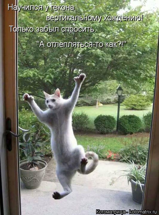"""Котоматрица: Научился у гекона  вертикальному хождению! Только забыл спросить: """"А отлепляться-то как?!"""""""