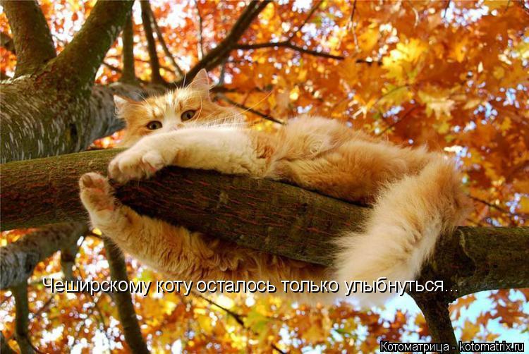 Котоматрица: Чеширскому коту осталось только улыбнуться...