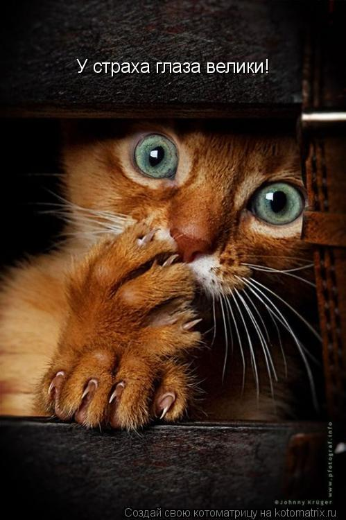 Котоматрица: У страха глаза велики!