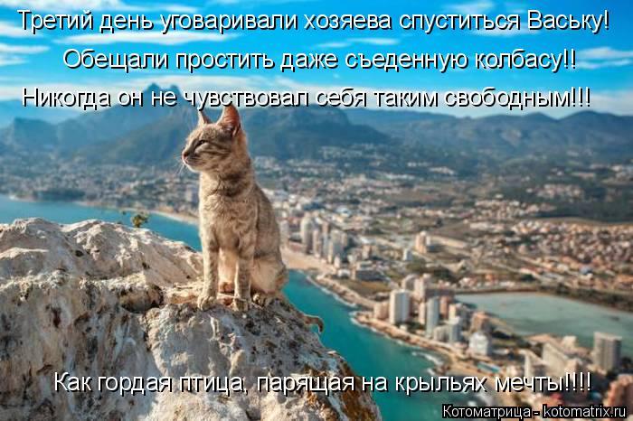 Котоматрица: Третий день уговаривали хозяева спуститься Ваську! Обещали простить даже съеденную колбасу!! Никогда он не чувствовал себя таким свободны