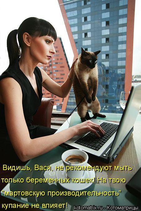 """Котоматрица: Видишь, Вася, не рекомендуют мыть только беременных кошек! На твою """"мартовскую производительность""""   купание не влияет!"""