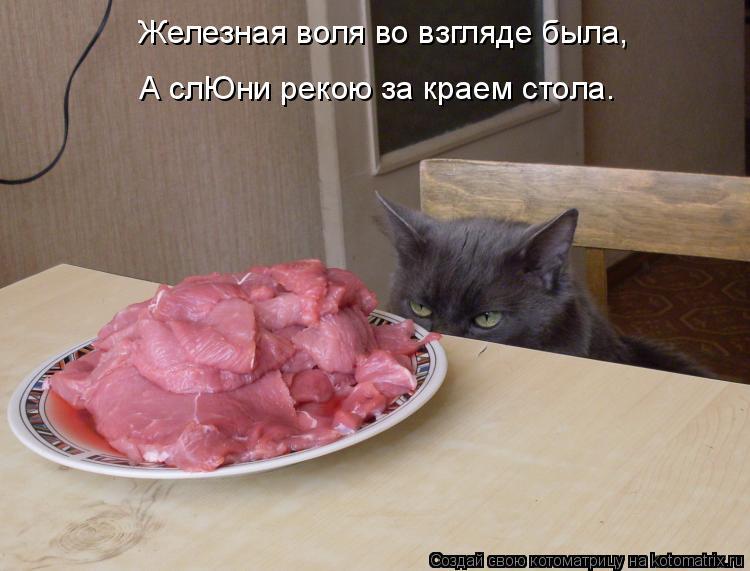Котоматрица: Железная воля во взгляде была, А слЮни рекою за краем стола.