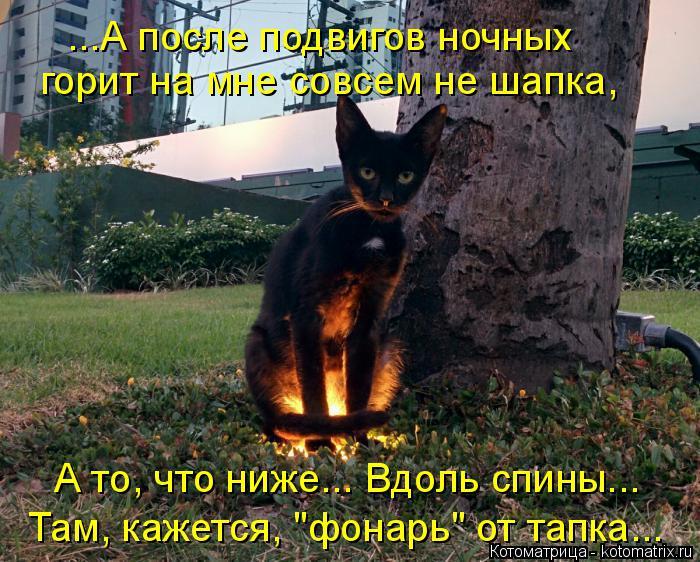 """Котоматрица: ...А после подвигов ночных горит на мне совсем не шапка, А то, что ниже... Вдоль спины... Там, кажется, """"фонарь"""" от тапка..."""