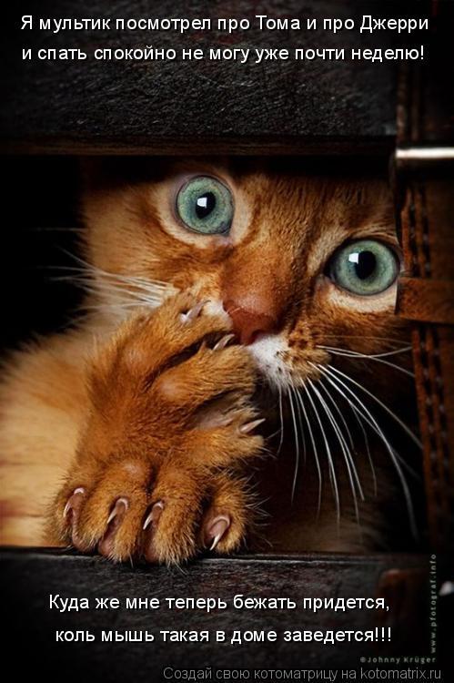 Котоматрица: Куда же мне теперь бежать придется, коль мышь такая в доме заведется!!! Я мультик посмотрел про Тома и про Джерри и спать спокойно не могу уже