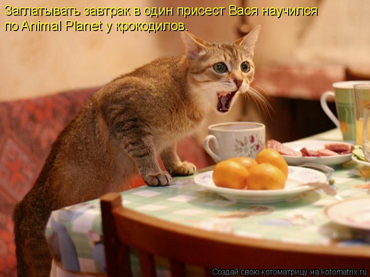 Котоматрица: Заглатывать завтрак в один присест Вася научился  по Animal Planet у крокодилов.