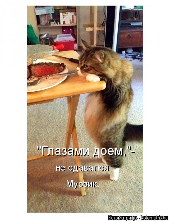 """Котоматрица: не сдавался  Мурзик. """"Глазами доем,""""-"""
