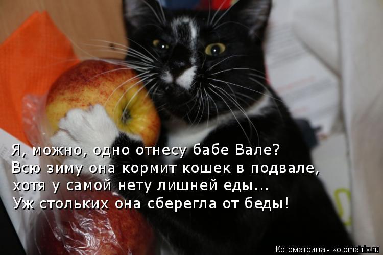 Котоматрица: Я, можно, одно отнесу бабе Вале? Всю зиму она кормит кошек в подвале, хотя у самой нету лишней еды... Уж стольких она сберегла от беды!