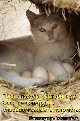 Котоматрица: После похода к ветеринару Вася решил другим способом заиметь потомство