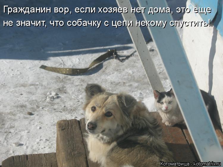 Котоматрица: Гражданин вор, если хозяев нет дома, это еще не значит, что собачку с цепи некому спустить!