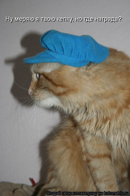 Котоматрица: Ну меряю я твою кепку, но где награда?