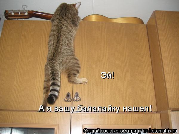 Котоматрица: Эй! А я вашу балалайку нашел!