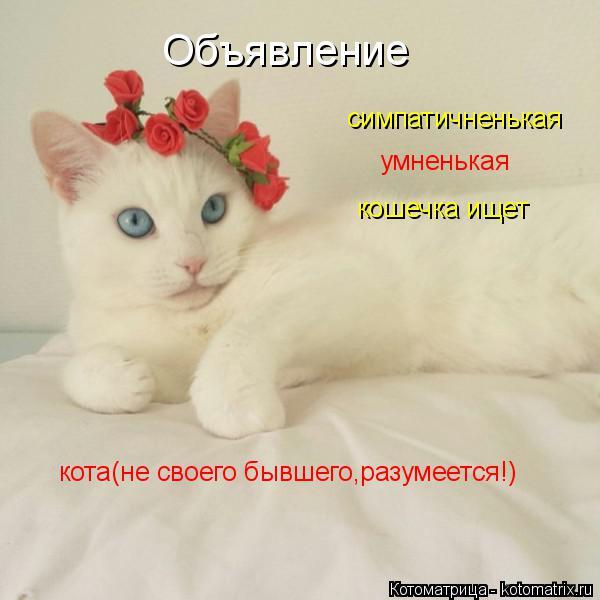 Котоматрица: Объявление симпатичненькая                     умненькая                кошечка ищет            кота(не своего бывшего,разумеется!)